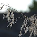 weeds freeway (1 of 1).jpg