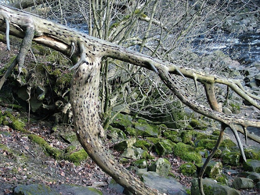 money-alberi (5)