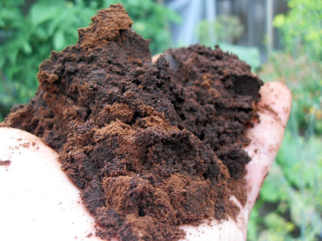 The History Of Used Coffee Grounds For Gardening
