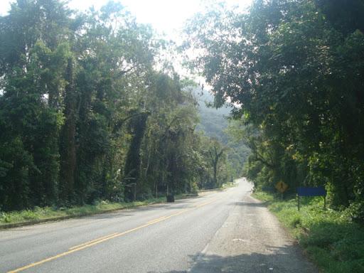 Mata preservada no trecho a caminho de Puruba (Ubatuba)