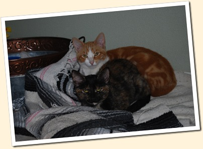 2 sweet cuddly kittens
