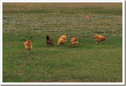 march 3011 farm life 014