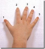 mano derecha