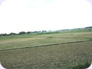 My Villageside Fields
