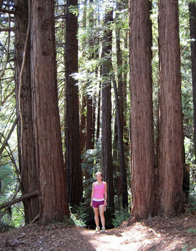 Peaceful redwood grove