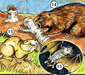 13. Gopher 14. Beaver 15. bat