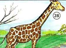 28. жирафа