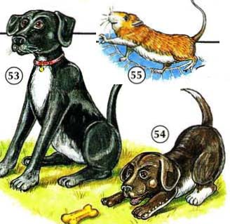 53. dog  54. puppy  55. hamster