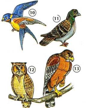 10. swallow 11. pigeon 12. owl 13. hawk