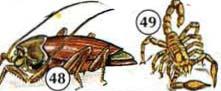 48. Roach/cucaracha 49. Escorpión