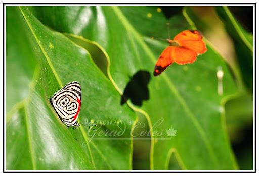 The 88 Butterflies