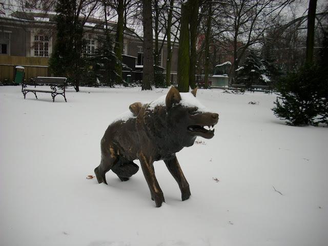 Wilk śnieżny - w tle: lew śnieżny