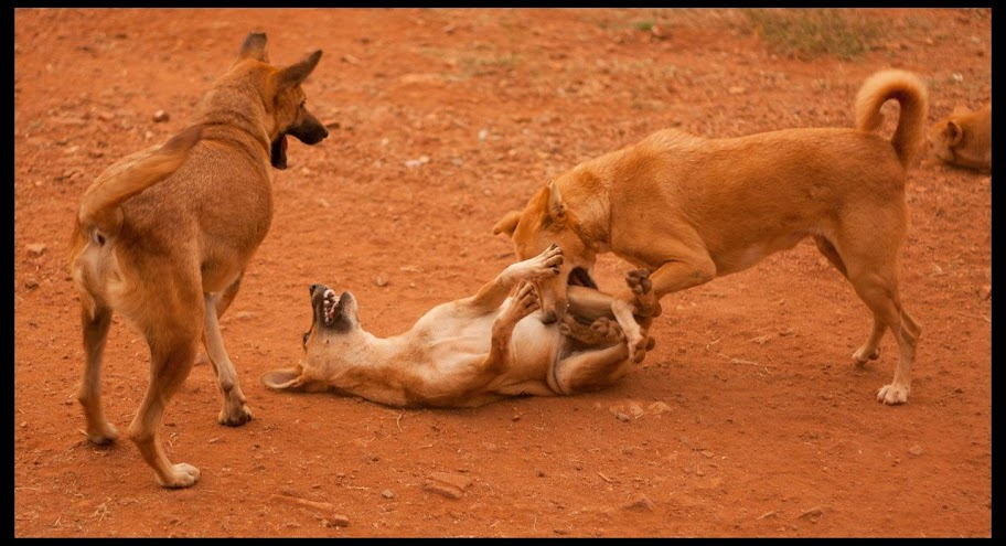 Playful Fight