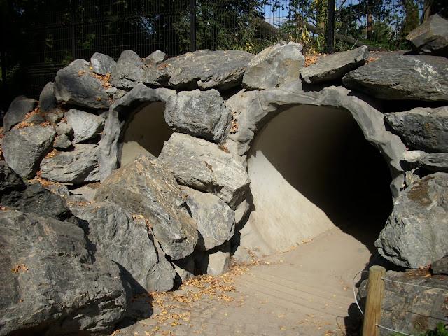 Tym tunelemw opolskim zoo dotrzemy do nietypowego punktu widokowego przy wybiegu wilków - możemy je bowiem obserwować z poziomu... gruntu