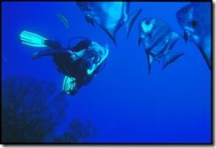Rebecca L Johnson, Mexico, with Atlantic Spadefish