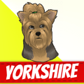 /he/yorkshire-terrier-dogs