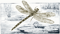dragonfly-illustration