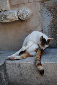 Split Croatia cat