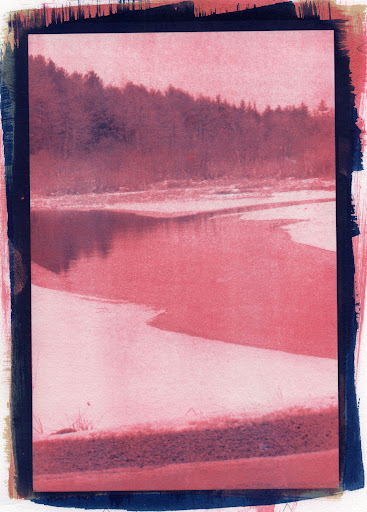 Black Moshannon State Park - Cyanotype over Single Layer Gum