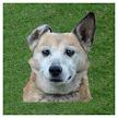 Dog whistle - trainer for dog APK