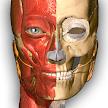 Anatomy Learning - 3D Atlas APK
