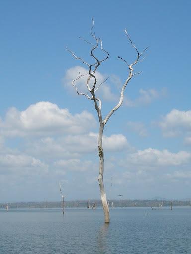 Lago Bayano, represa grande