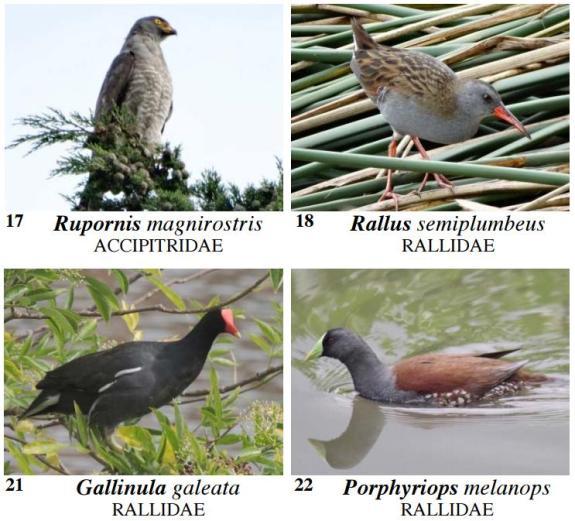 Aves de la Conejera
