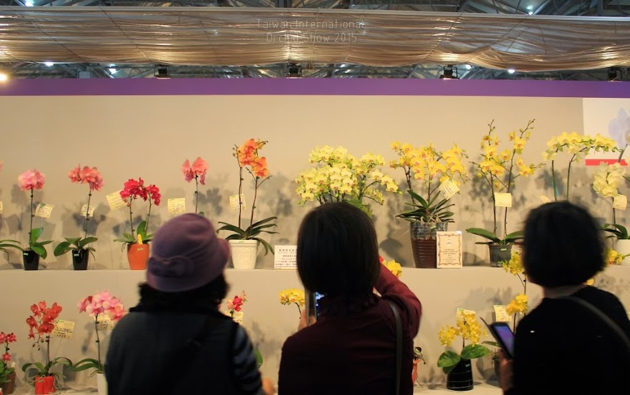 2015 台灣國際蘭花展-6
