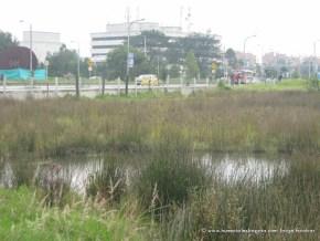 Humedal Salitre Greco, al fondo Avenida El Dorado