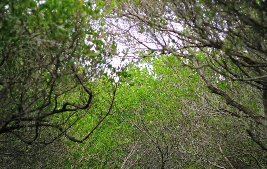 台南安南景點,四草紅樹林綠色隧道-2