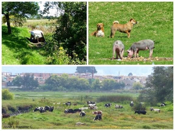 Cambuches, ganadería y basuras entre las problemas que se quiere evitar con el cerramiento propuesto.