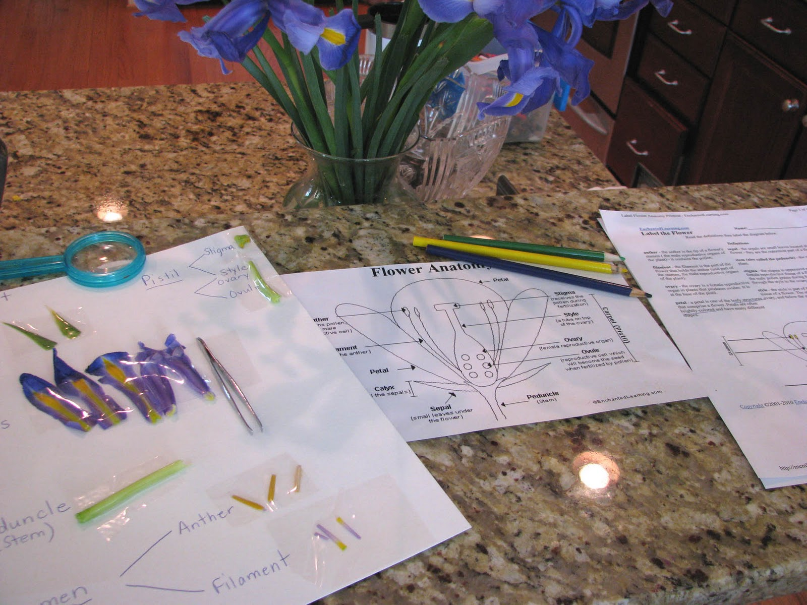 Homeschool Muse Mom Dissecting A Flower