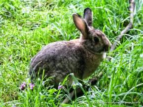 Conejo, Humedal La Conejera