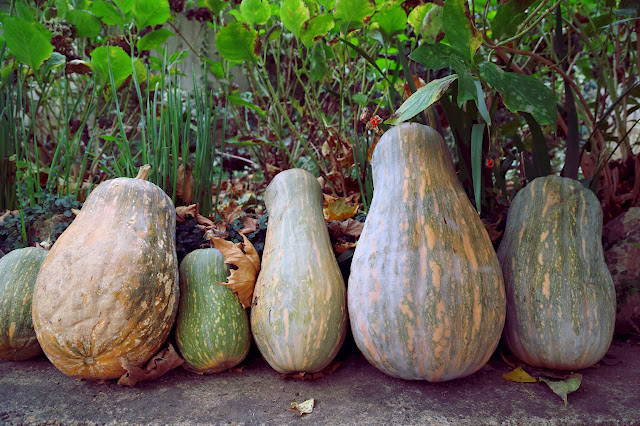 Giant pumpkins , alentejo, pic: Kerstin Rodgers/msmarmitelover