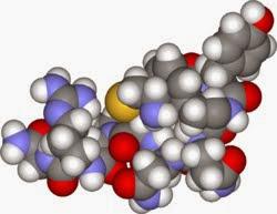 抗利尿激素(Antidiuretic Hormone. ADH) - 小小整理網站 Smallcollation