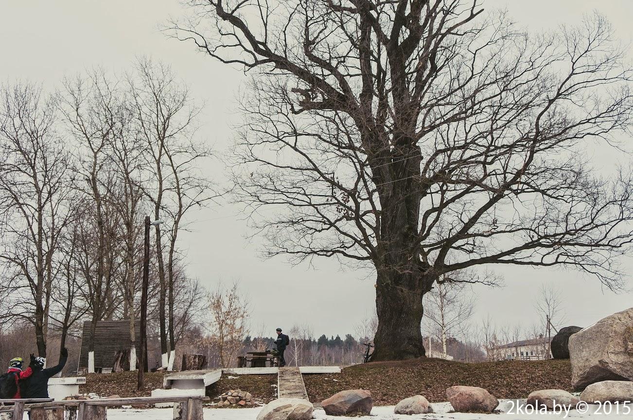 Стары дуб у парку