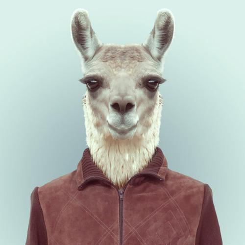 *Zoo Portraits動物時尚秀:正經八百時裝篇! 17