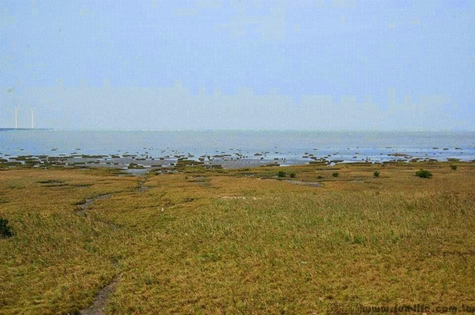 台中海線景點,薦高美濕地-2
