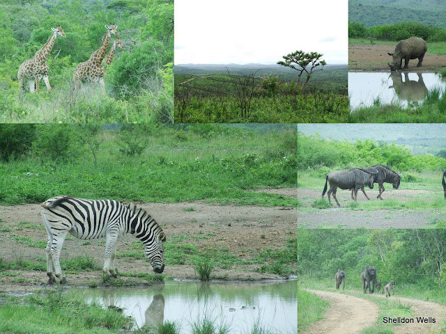 Hluhluwe/Imfolozi Game Reserve Collage
