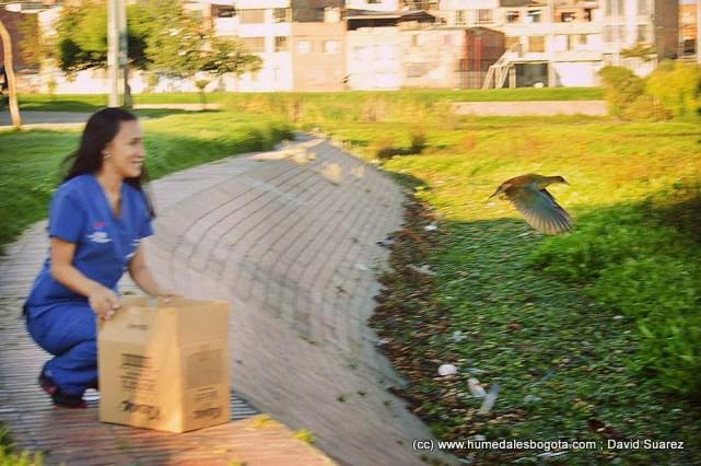 Liberación de Tingua en el Humedal Jaboque