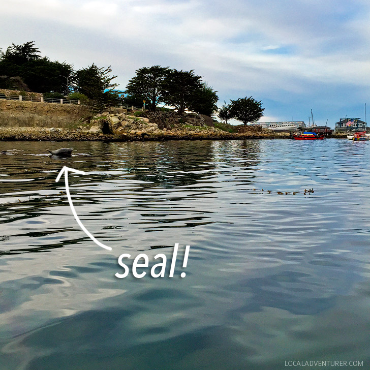 Monterey Bay Kayaking.