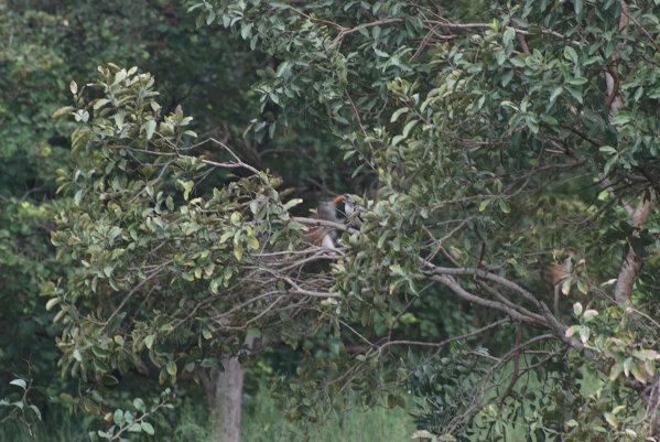 Monos y pájaros Fathala Senegal