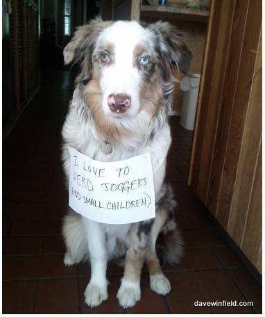 Shamed Dog 14