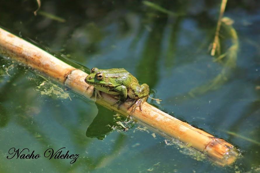 18 de Octubre: Día Mundial de la Naturaleza (2/2)