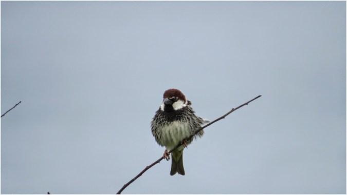 More unknown birds :) - Ahtopol
