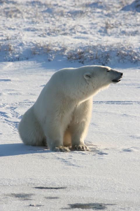 Bären in ihrer natürlichen Umgebung zu sehen ist kein Vergleich zum Zoobesuch