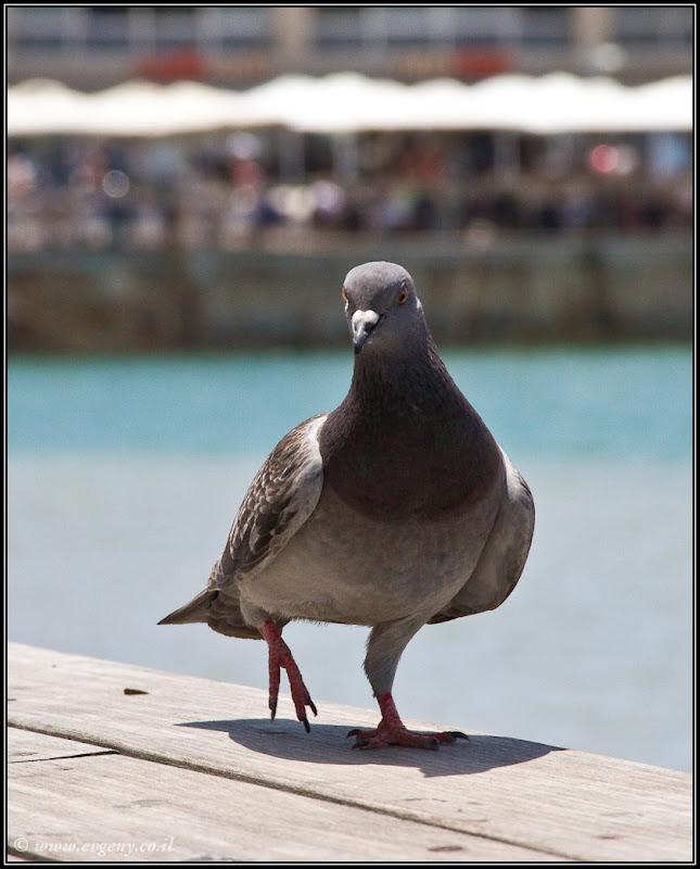 Фото: ...и вновь о птичках