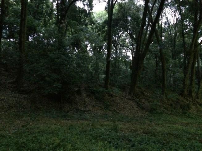 追悼碑に向かう園内の小径の左側の写真