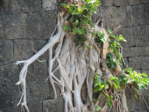Kolaba Fort walls at Alibaug
