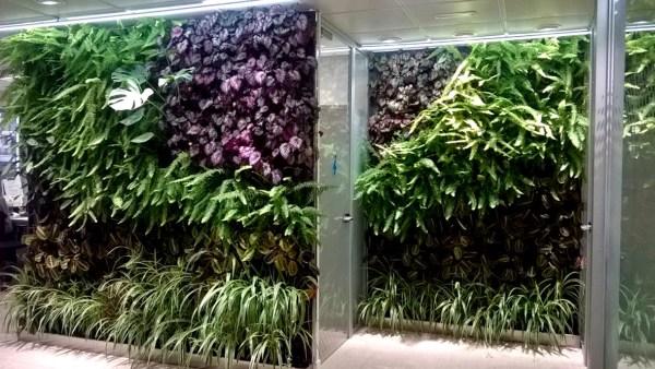 Jardínes Verticales de interior - 5 meses después
